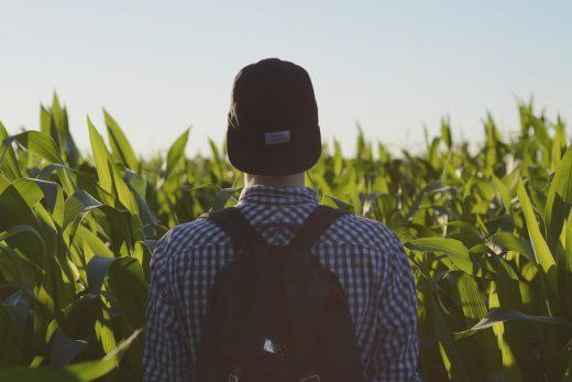 Un homme dans un champs de maïs