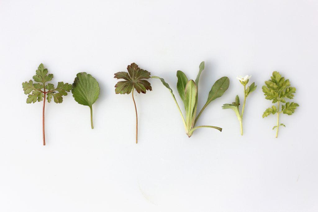 Différentes herbes aromatiques